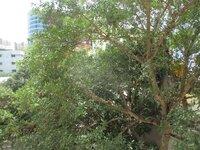 15M3U00175: Balcony 2