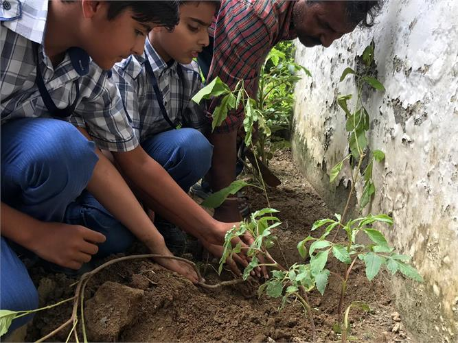 Tree Plantation Drive byDelhi State Legal Services Authority and Foundation & Rotary Inttion & Rotar
