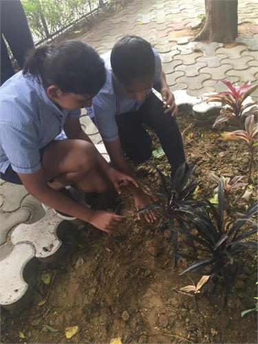 Tree Plantation Drive on 9th August 2019