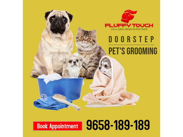 We offers Pet Grooming and Pet Training Services at Home in Delhi-NCR - 3/3