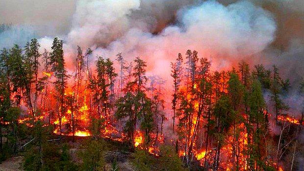 Wildland fire and emergency management