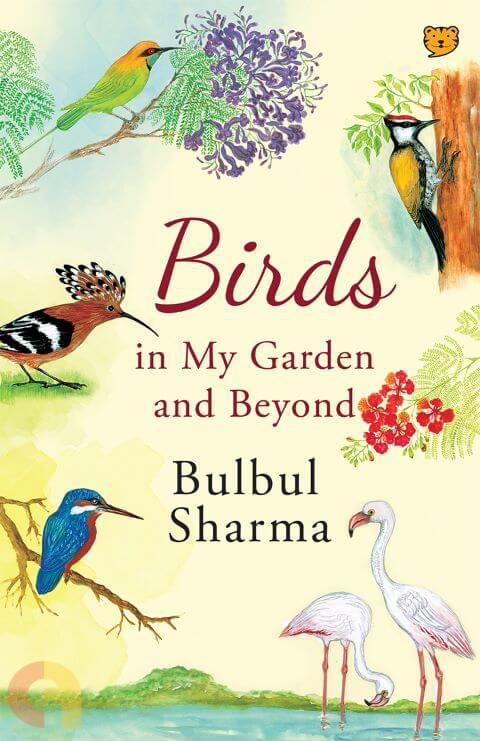 Birds in my garden and beyond