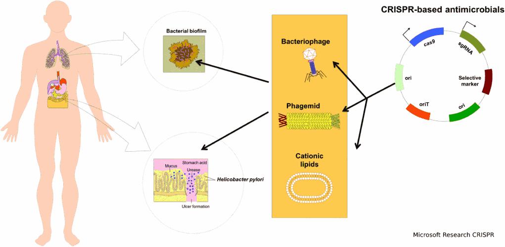 CRISPR ML