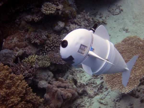 SoFi robotic fish unobtrusively observing and diving into the coral reefs