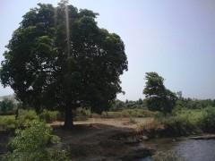 http://www.thegreatnext.com/Muthavli Riverside Camping Kolad Kundalika Maharashtra Mumbai Pune The Great Next