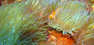 PADI Scuba Diver Course in Havelock