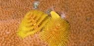 http://m.thegreatnext.com/Scuba Diving Scuba Diver Course Andamans Havelock Adventure The Great Next