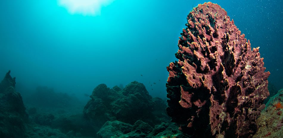 http://www.thegreatnext.com/Scuba Diving OWD Course Andamans Havelock Adventure The Great Next