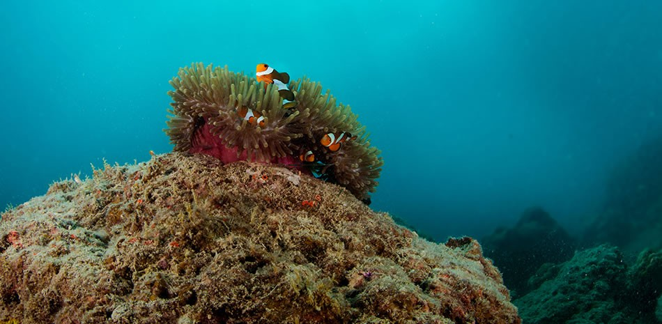 http://m.thegreatnext.com/Scuba Diving Course Andamans Havelock Adventure The Great Next