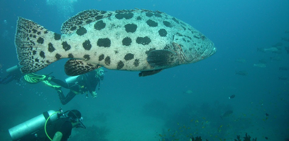 http://m.thegreatnext.com/Scuba Diving AOWD Course Andamans Havelock Adventure SSI The Great Next