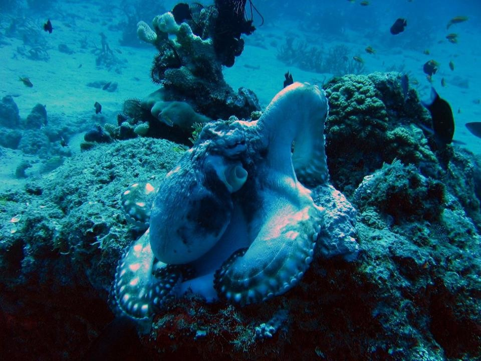 http://m.thegreatnext.com/Scuba Diving Andamans Neil Island Sea Turtle Fish The Great Next