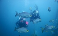 http://m.thegreatnext.com/Couples Private Dive Scuba Diving Pondicherry Discover Scuba Ocean Adventure The Great Next