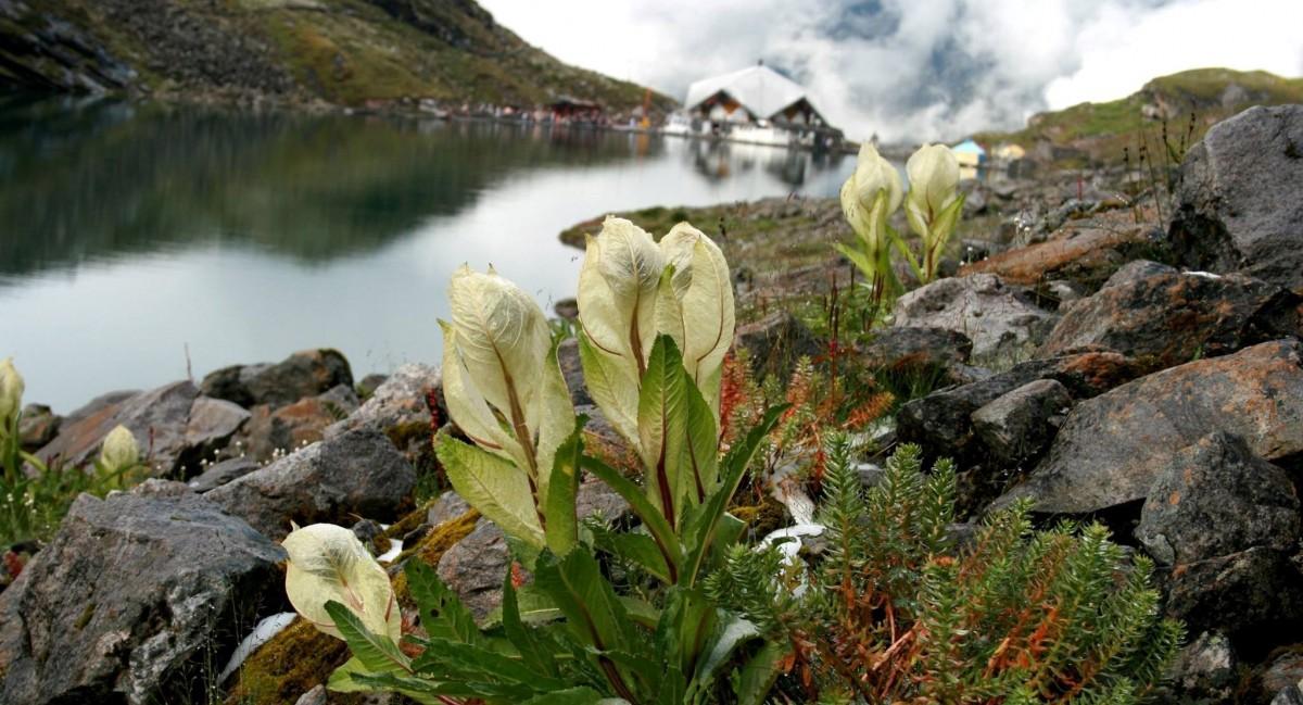 http://www.thegreatnext.com/Trekking Valley Of Flowers Uttarakhand Adventure Travel The Great Next