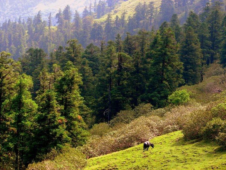 http://m.thegreatnext.com/Chopta Camping Uttarakhand Himalayas Rappelling Rock Climbing Tent Adventure The Great Next