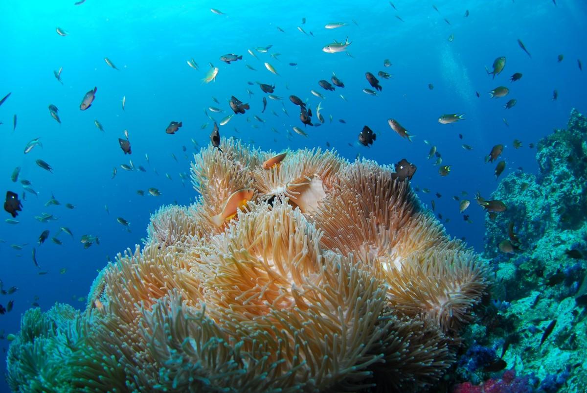 http://m.thegreatnext.com/Scuba Diving Andamans Adventure Scuba Ocean Adventure Sea Open Water PADI Course