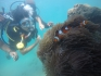 http://www.thegreatnext.com/Scuba Diving Havelock Andaman Try Dive Adventure Activity Nature