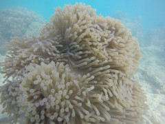 http://m.thegreatnext.com/Scuba Diving Havelock Andaman Try Dive Adventure Activity Nature
