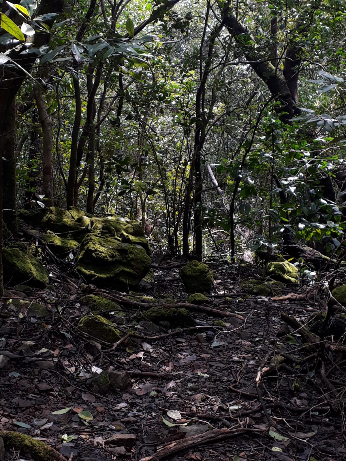 http://m.thegreatnext.com/Andharbhan Night Trek Maharashtra Sahyadris Trekking Adventure Activity Nature