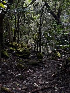 http://www.thegreatnext.com/Andharbhan Night Trek Maharashtra Sahyadris Trekking Adventure Activity Nature