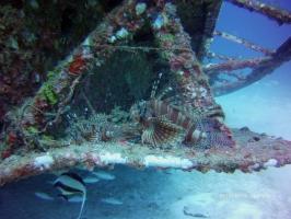 Bali Fun Dive at Tulamben Shipwreck