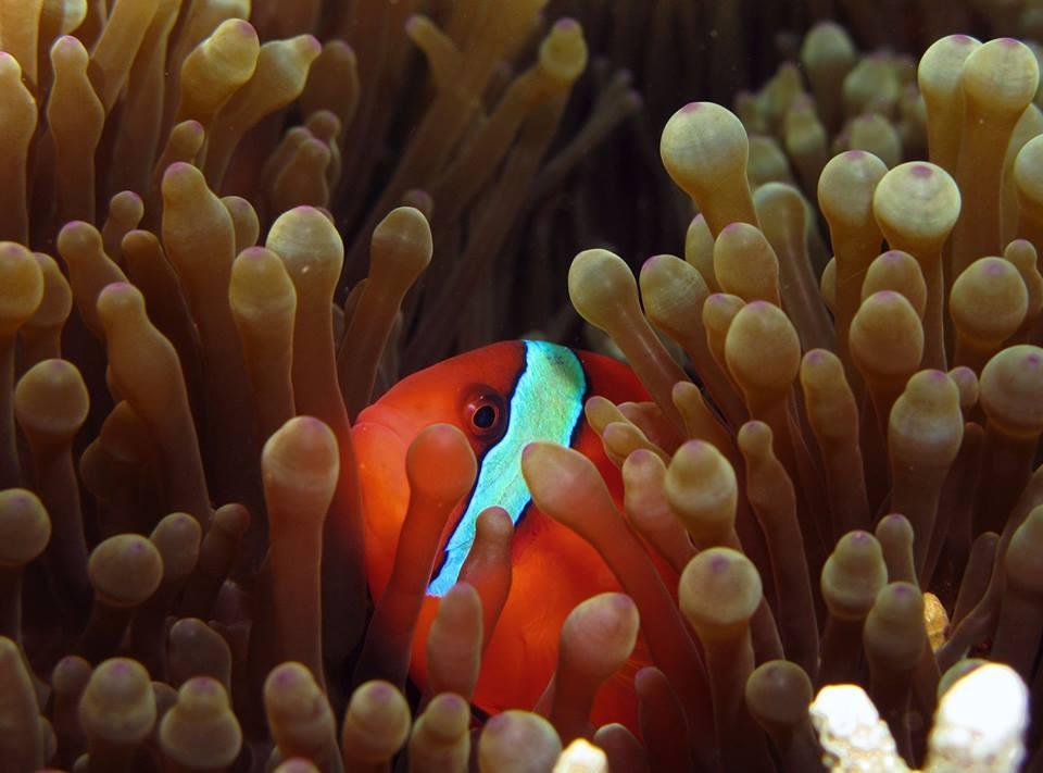 http://www.thegreatnext.com/Wreck Diving Tulamben Bali The Great Next