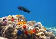 http://www.thegreatnext.com/Scuba Diving Bali Discover Scuba Dive The Great Next