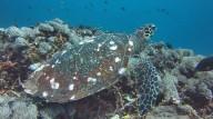 http://m.thegreatnext.com/Scuba Course Bali PADI Scuba Diver The Great Next