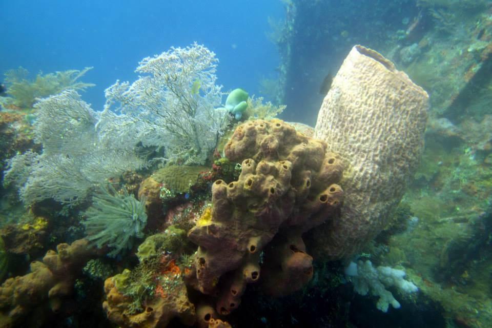 http://m.thegreatnext.com/Wreck Dive Tulamben Coral Garden The Great Next