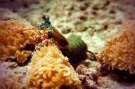 http://www.thegreatnext.com/Scuba Diver SSI Course Bali Tulamben Padang Bai Amed The Great Next