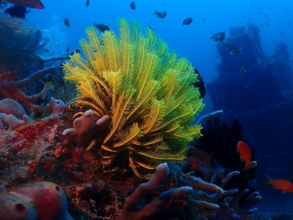 http://www.thegreatnext.com/Scuba Diver SSI Course Bali Tulamben Padang Bai Amed The Great Next