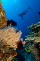 PADI Open Water Diver Course in Bali