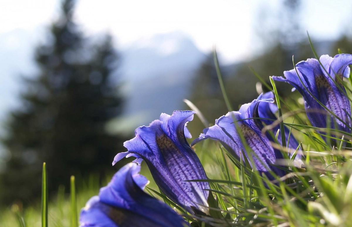 http://www.thegreatnext.com/Valley of Flowers Uttarakhand Trekking Haridwar The Great Next