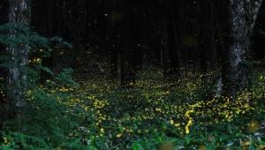 Fireflies Trek to Kondhane