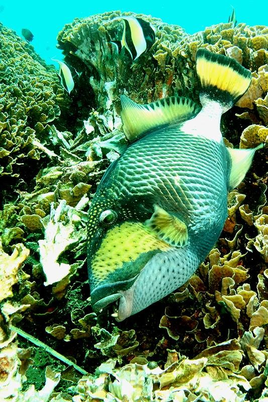 http://m.thegreatnext.com/Scuba Diving Bali Indonesia Adventure Travel The Great Next