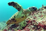 http://m.thegreatnext.com/Scuba Trip Discover Scuba Dive Bali Adventure Travel The Great Next