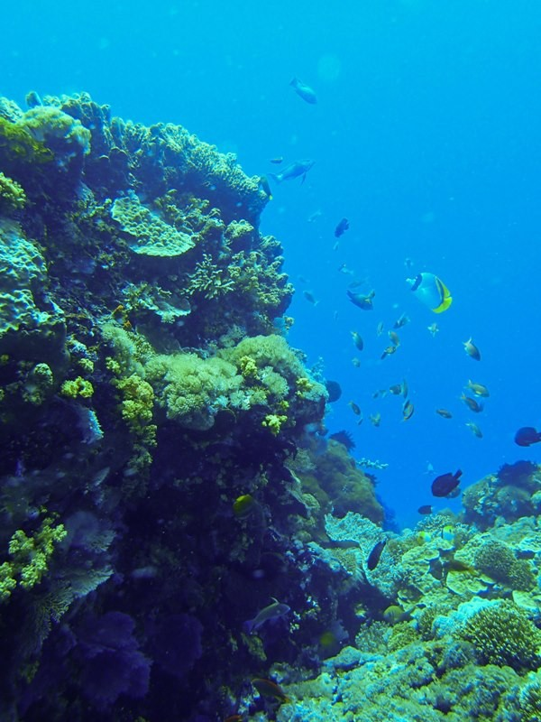 http://m.thegreatnext.com/Scuba Diving Course PADI Bali Open Water Diver Indonesia Adventure Travel The Great Next