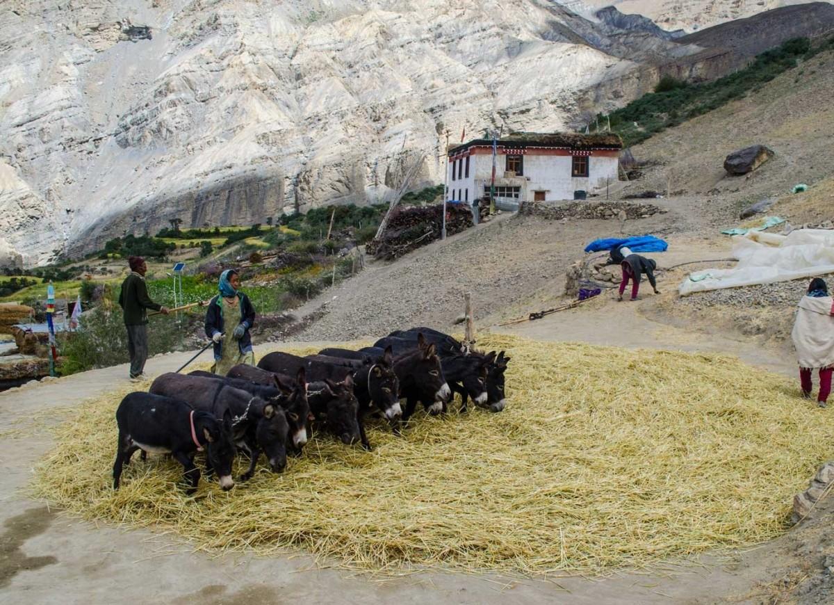 http://www.thegreatnext.com/Spiti Valley Trek Himachal Pradesh Adventure Travel The Great Next