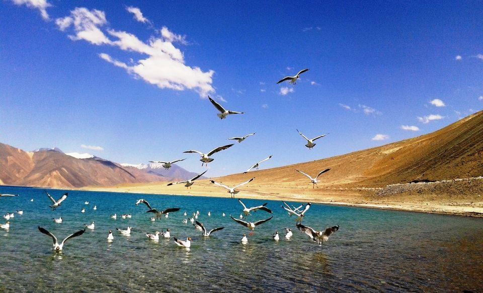 http://m.thegreatnext.com/Camping Jammu Kashmir Pangong Lake Luxury Nature Travel Adventure Activity