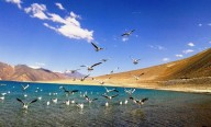 http://m.thegreatnext.com/Camping Jammu Kashmir Pangong Lake Luxury Nature Travel Adventure Activity