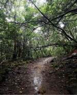 http://m.thegreatnext.com/Trekking Andharban Pune Maharashtra Adventure Travel The Great Next