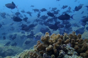 SSI Open Water Diver Course in Murdeshwar