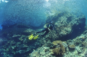 PADI Advanced Open Water Course in Andaman