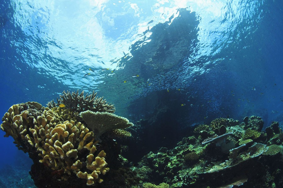 http://www.thegreatnext.com/Scuba Diving Course Advanced Open Water Diver PADI Andaman Adventure Travel The Great Next