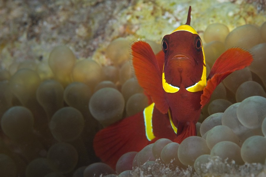http://m.thegreatnext.com/Scuba Diving Course Advanced Open Water Diver PADI Andaman Adventure Travel The Great Next