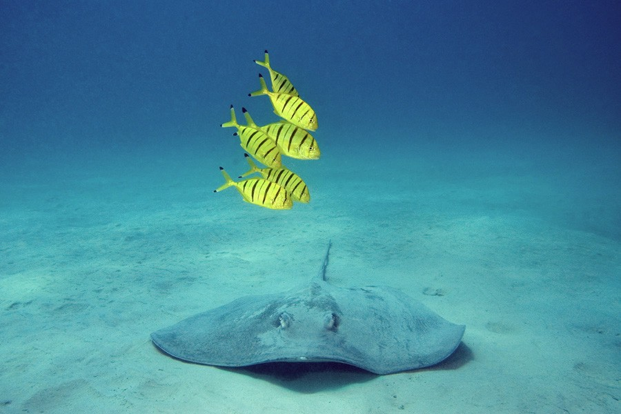 http://m.thegreatnext.com/Scuba Diving Chidiya Tapu Andaman Adventure Travel The Great Next