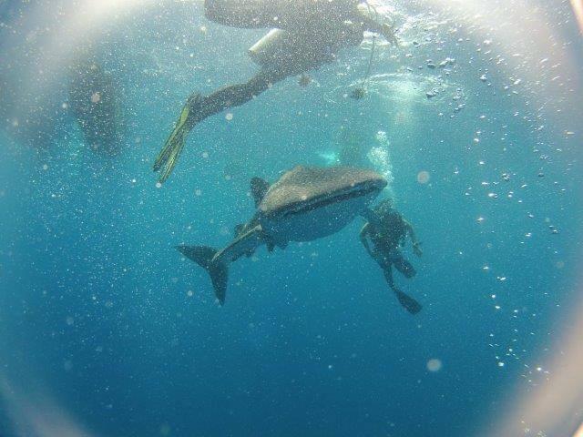 http://m.thegreatnext.com/Scuba Diving Open Water PADI Andaman Havelock Adventure Travel The Great Next