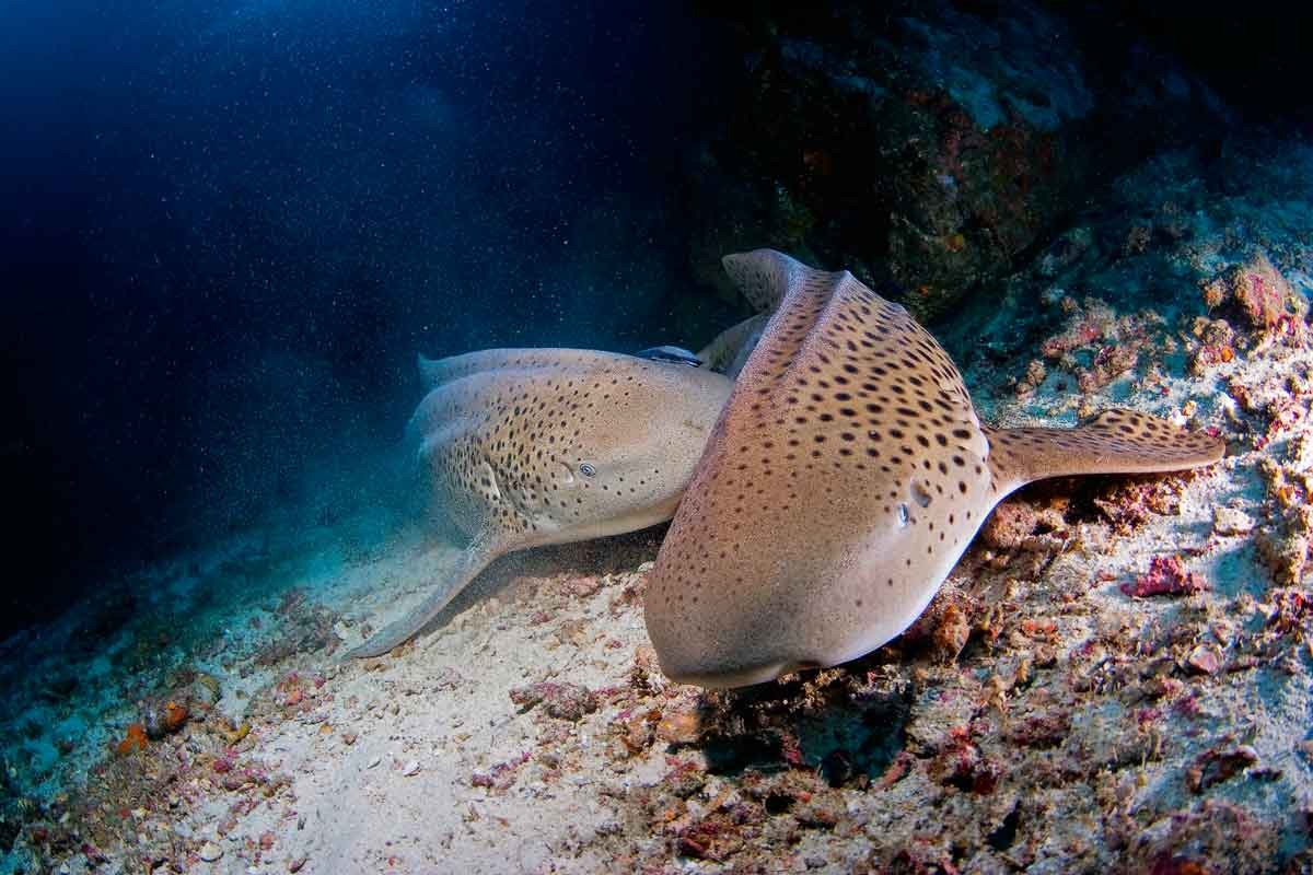 http://www.thegreatnext.com/Scuba Diving Course PADI Andaman Adventure Travel The Great Next