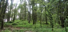 http://m.thegreatnext.com/Trekking Dayara Bugyal Uttarakhand Adventure Travel The Great Next