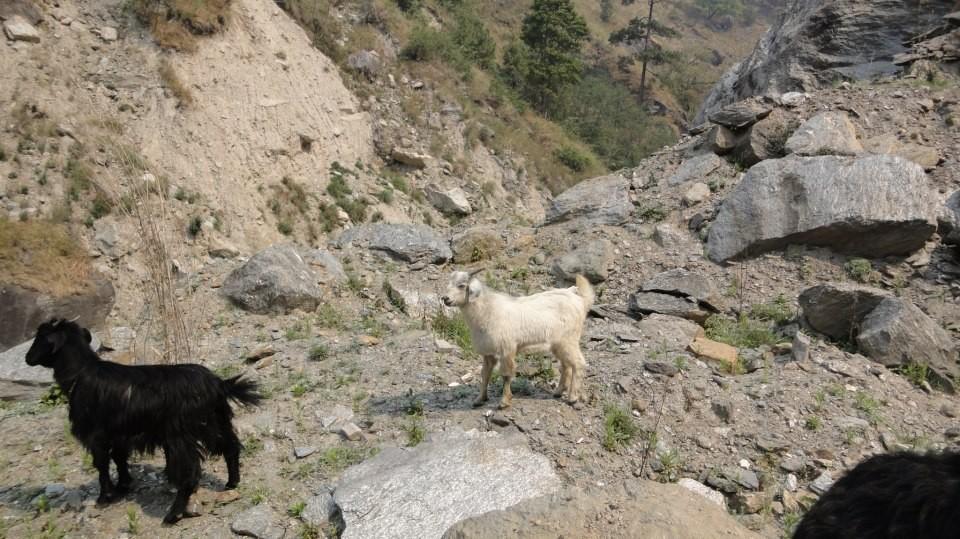http://m.thegreatnext.com/Langtang Valley Trekking Nepal Adventure Travel The Great Next