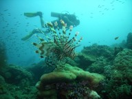 http://www.thegreatnext.com/Scuba Diving Nemo Reef Havelock Andaman Nicobar Adventure Travel The Great Next